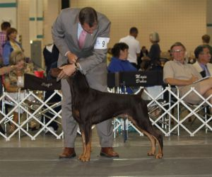 Ch. Logres' Warkant with Cliff Steele