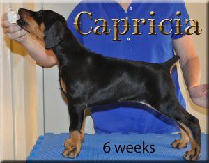 1-8-10-CapriciaX2.jpg
