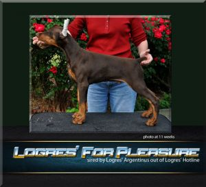 Logres' For Pleasure - at 11 weeks