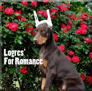 Logres' For Romance at 11 weeks