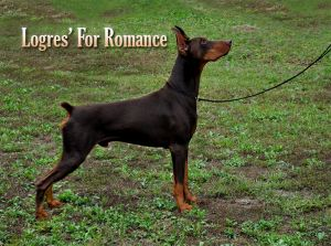 Logres' For Romance  on  9-20-2014