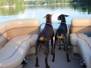 Brentano and Bella on the boat with Lili and Brett