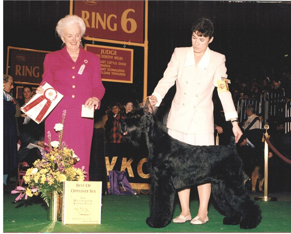 Ch__Logres_Midnight_Motion_at_Westminster_Kennel_Club_DOg_Show_1995.jpg