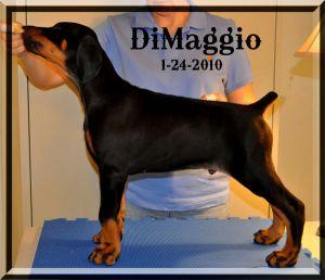 1-24-10-DiMaggio.jpg