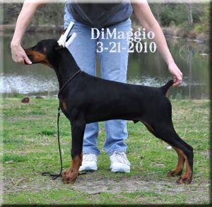 DiMaggio-3-21-2010xX.jpg