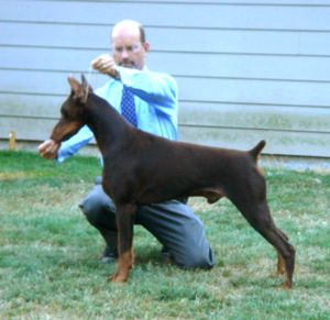 Ch. Logres' Titanium - by BIS BISS Ch. Brunswigs Cryptonite out of Cambria's Irish Rose