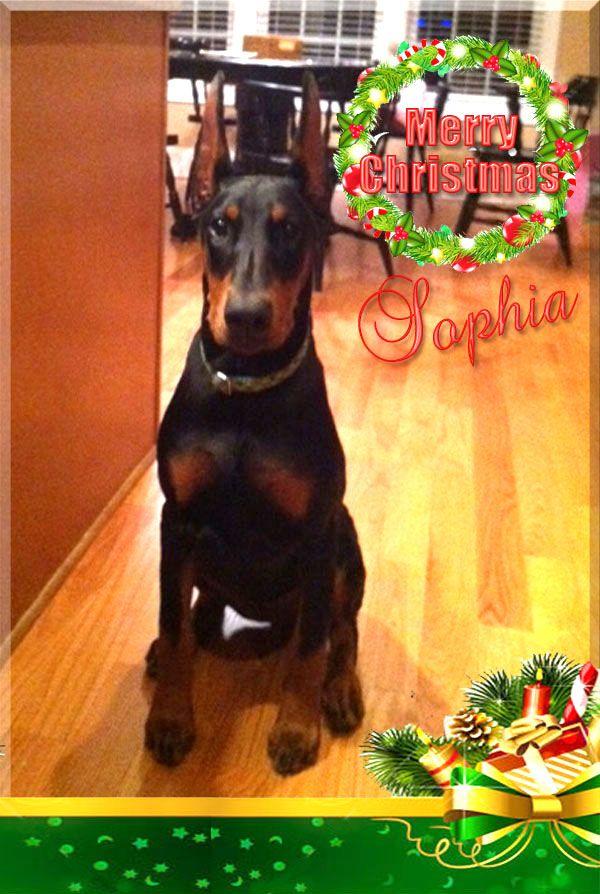 Sophia-ChristmasX.jpg