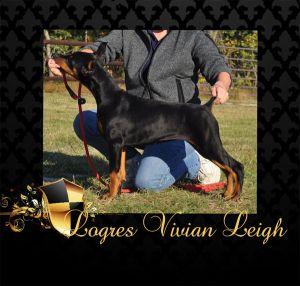 Logres' Vivian Leigh