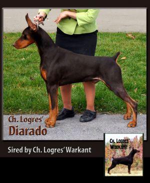 Ch Logres Diarado - by Ch. Logres Warkant -