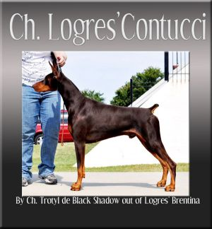 Ch. Logres Contucci WAC, RA, ROM