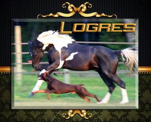 our stallion Sandro D running with Ch. Logres' Titanium - in August of 2008