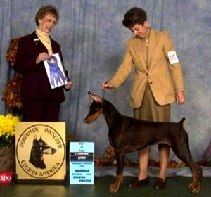 Cambrias Irish Rose at the 2002 DPCA National